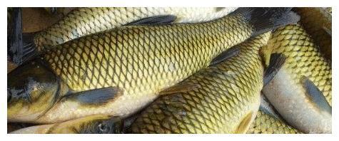 味道鲜美的淡水鱼,很多人都不认识,全吃过的是吃货