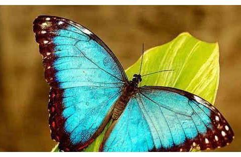 心理测试:四只蝴蝶哪一只是假的,测你在爱情中最怕的是什么?