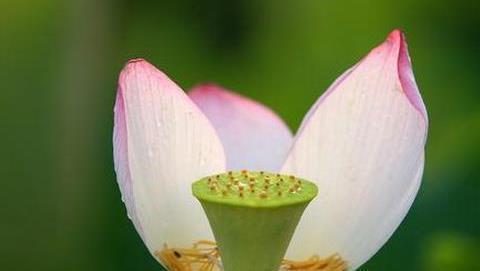 阿姜查禅师开示:如何做到心的平衡与中立?