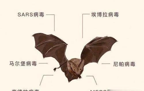 蝙蝠身藏数百种病毒,为何它百毒不侵?看完你就明白了