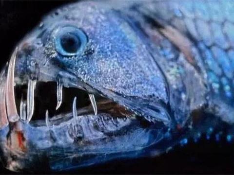 谁是最危险的鱼?食人鱼只能排第五,而它吸食血肉,号称吸血鬼!