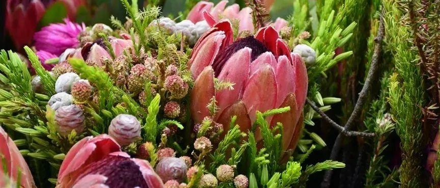 云逛各地花市:我竟然看到了生菜、芹菜和葱!