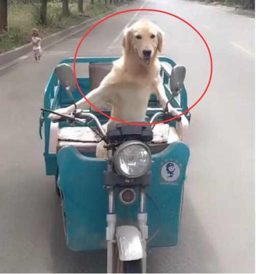 一个农村男人养了一只宠物狗 这只
