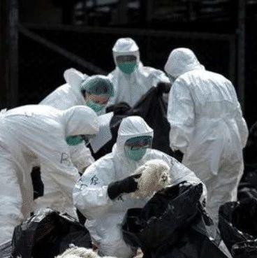 又一欧洲国家爆发严重疫情,西方建议不忍直视,专家:向中国看齐