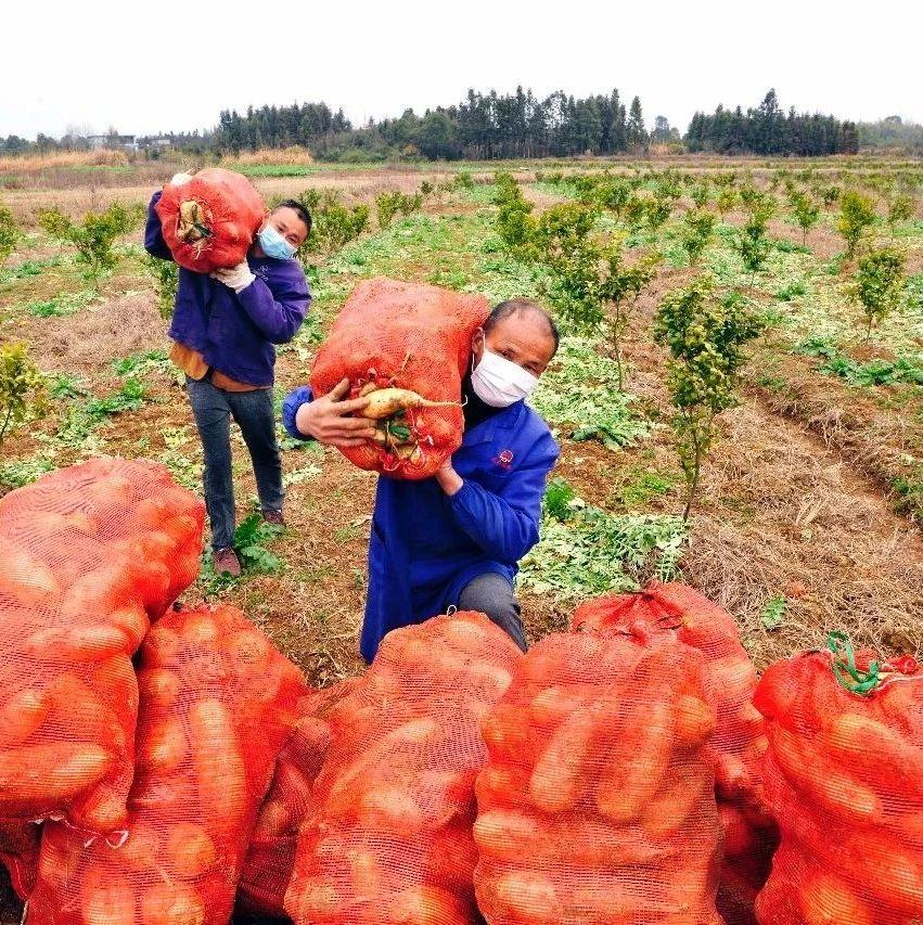 有爱!万载菜农捐65吨蔬菜驰援武汉!