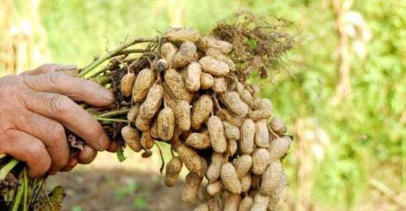 下半年 成都、自贡、广元等地林业病虫害有上升风险