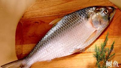 抗衰老,补血的干烧鱼