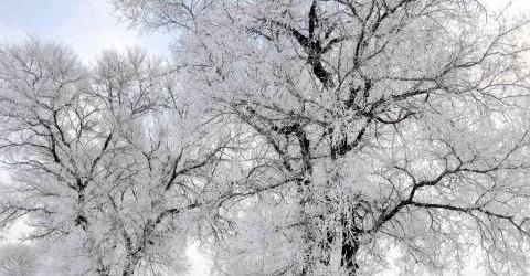 随手一拍都能拍出仙境的雾凇究竟有多美?雪后的松花江畔来看美景
