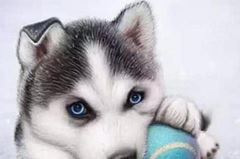 当狗狗舔你的脸颊时,其实他并不是在亲吻你