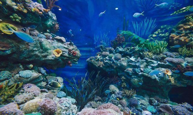 上海周末去哪儿玩?亲子首推荐海昌公园,来一场大海之旅
