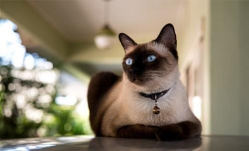 猫咪耳朵前面有一块毛发稀少,难道是秃了?其实藏着腺体的秘密