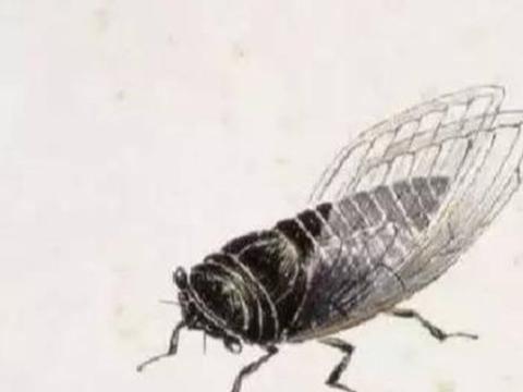 齐白石画一只蝉值7亿,网友质疑,专家:放大10倍看看蝉的翅膀