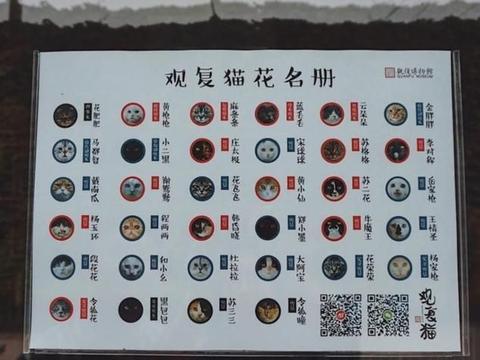 北京观复博物馆:在欣赏马未都的私人珍藏的同时,还有猫咪作陪