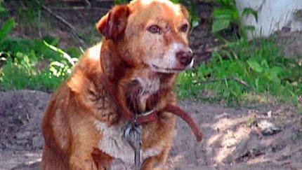 狗狗被铁链拴12年,从未进过家门,被救后狗狗的表情让人落泪
