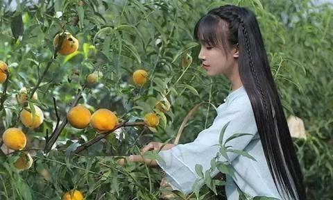 感受山林美食,李子柒隐居四川平武,发扬古典文化