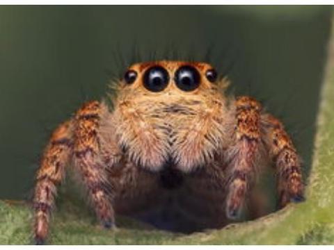 野生动物、昆虫数量急剧减少,背后原因却是人类的所作所为!
