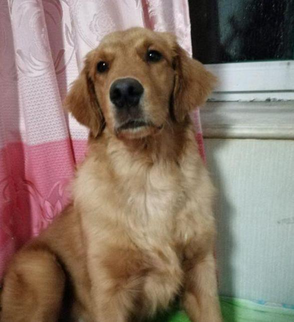 出差将狗狗寄养朋友家,一张照片让主人潸然泪下,亏欠狗狗太多
