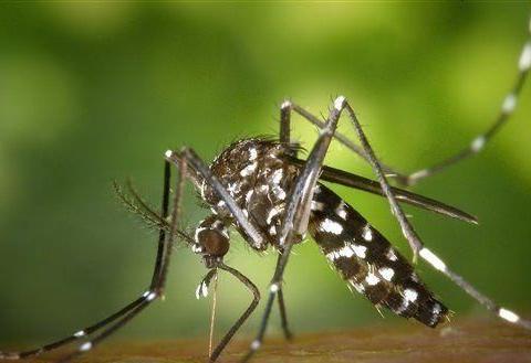 蚊子引发的瘟疫曾使美国政府关门,财政部长被隔离