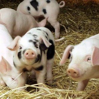农业农村部、财政部通知要求   加强病死畜禽无害化处理,促进畜牧业绿色发展