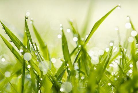 雨水时节重在护脾脏!常食一物巧养生