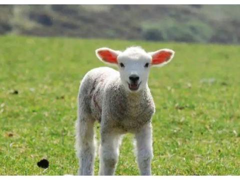 """属羊人:明、后两天,将发生""""爆炸""""的新闻,是""""福""""还是""""祸"""""""