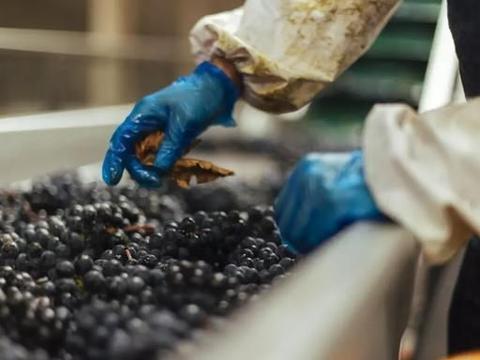 正确的葡萄酒酿制方法,怎么酿葡萄酒
