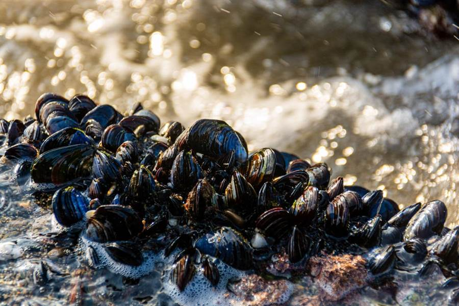 """怪异!50万贝壳死在新西兰海滩,专家:全球变暖将其""""煮熟""""!"""