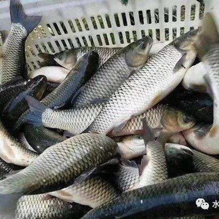 滞销严重,12个水产大省的水产品总存量近500万吨,大宗淡水鱼对虾小龙虾等品种销售难