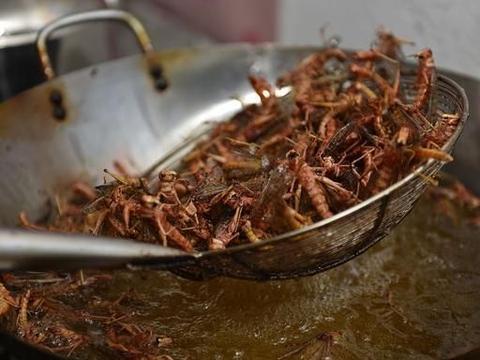 """蝗虫在巴基斯坦、印度肆虐,我们对付蝗虫的做法有些""""豪横"""""""