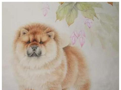 属狗人桃花运最好的年份?