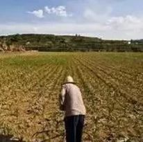【原创】农村土地集体所有承包制的发展优势研究