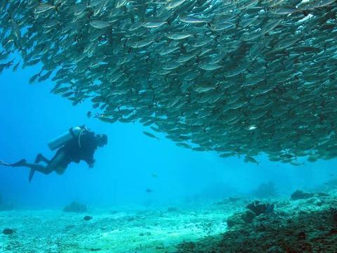 热烈狭长的红海,流传海盗传说的加勒比海,也比不过迷人的珊瑚海
