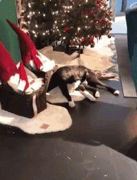 去逛宜家时居然看到有流浪狗睡在地毯上?知道真相后被感动到了