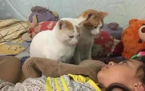 女子忘记给猫咪喂食,睁开眼后却想继续装睡:这该怎么解释啊?