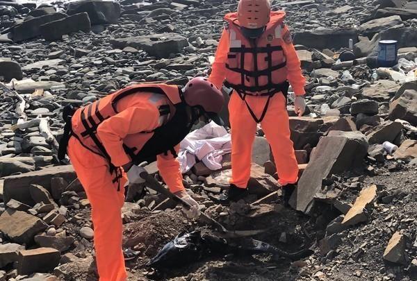 海巡署获报 出风鼻岸际发现一只鲸豚 已死亡实施就地掩埋