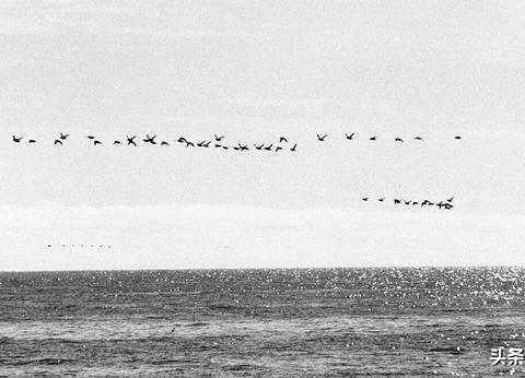 加勒比海鸟群逃亡145公里,灾难发生前许多动物比人类提前预知