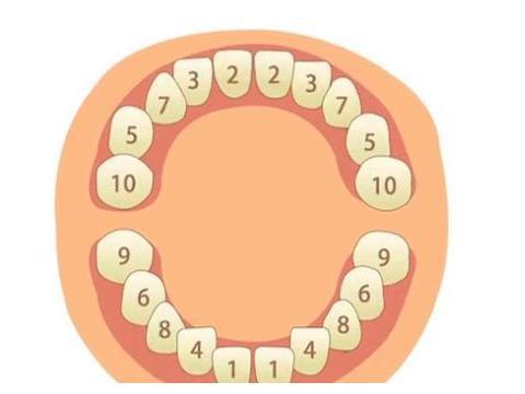 宝宝几个月长牙算正常?怎样做可以训练孩子出牙?