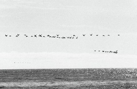 加勒比海出现异象,一鸟群逃亡绵延145公里,美国恐迎来巨大灾