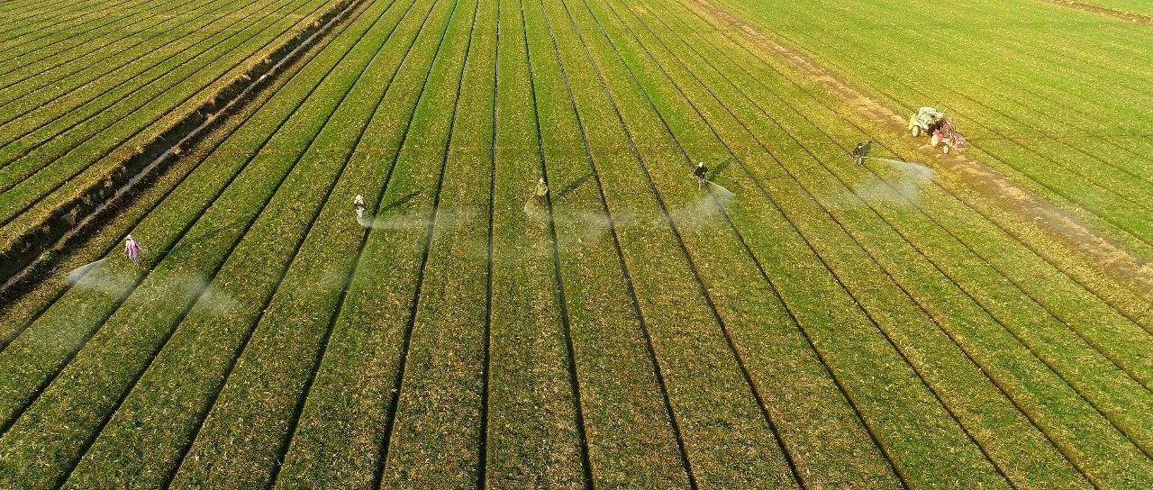 独家!联合国粮农组织:新冠肺炎会对农业和粮食安全产生什么影响?