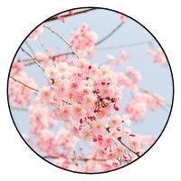 诗词丨毛泽东诗词里的春天,大气磅礴,铿锵有力!