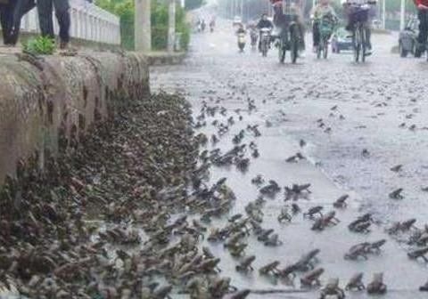 唐山大地震前发生多个预兆,人们也都看见了,为什么却没跑?