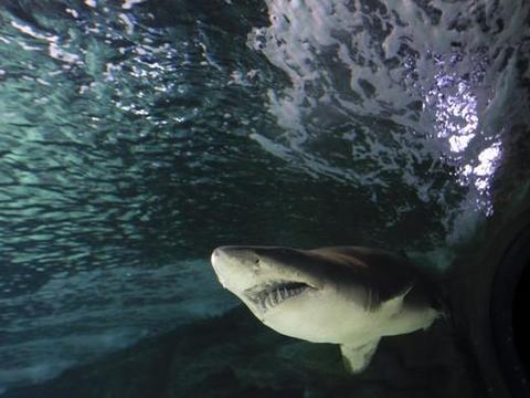 体重的8倍!8岁男童靠一支鱼竿钓到314公斤虎鲨 打破22年世界纪录