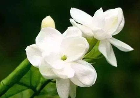 喜欢雍容华贵的,不如养这朵小花,花朵稠密,花型圆滚惹人爱