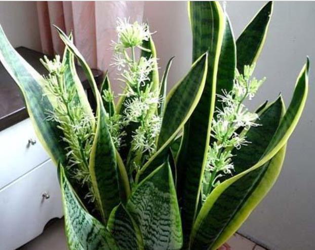 爱上养花,试试这几款,折个枝就能活,7天生根,1月就爆盆