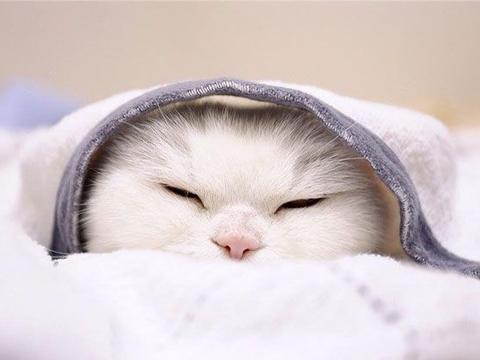 """全日本""""最软萌的网红"""" 20岁猫奶奶只是躺着就收编万名粉丝!"""