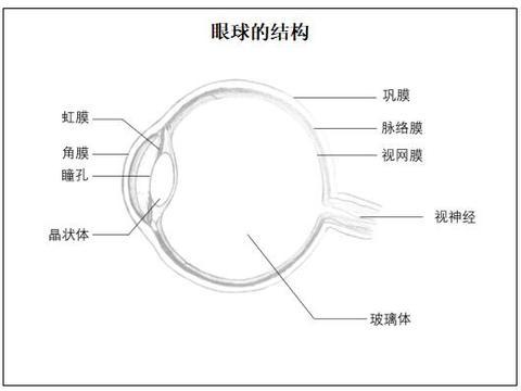 《眼球的结构》教案_教师资格面试初中生物
