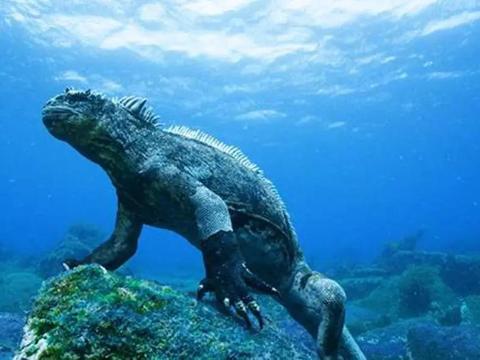 哥斯拉是恐龙还是鳄鱼?它的原型终于被找到了,现实里很温顺