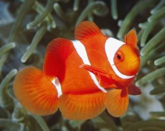心理测试:你会选择养哪条鱼?测你最近被什么运气缠身