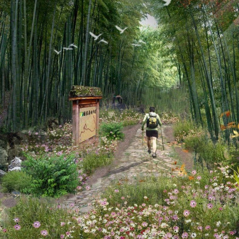 全长50公里!风景美如画!这条三明人家门口的国家级森林步道开建啦!