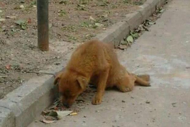 流浪狗被人打断双腿,仅靠着前肢缓慢爬行,神情让人心疼